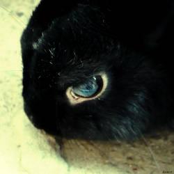 Rabbit.. by gomit