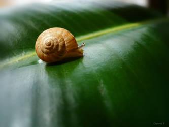 Snail.. by gomit