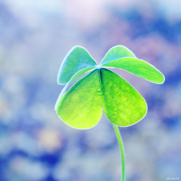 ..Clover.. by gomit