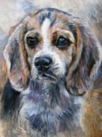 Beagle by Katie-Z