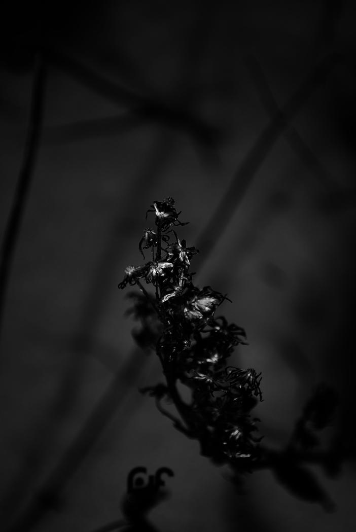 phantom by jk3y