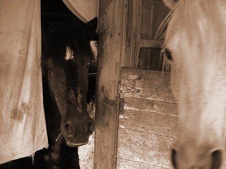Horses by JoeHobeaux