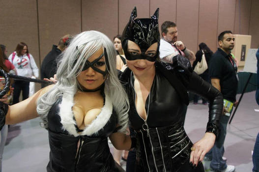 BlackCat and Catwoman