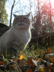Tabby behind the grass