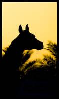 Arabian Horse Silhouette by ThE-uNiQuE