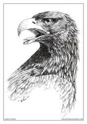 Eagle by drakhenliche
