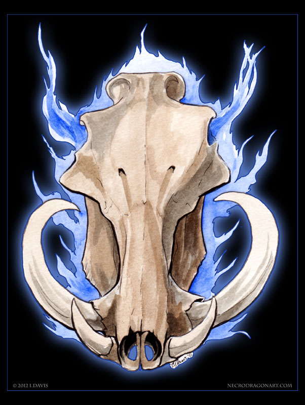 Skull. Warthog by drakhenliche on DeviantArt