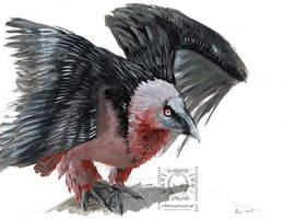 Speedpaint - bearded vulture by drakhenliche