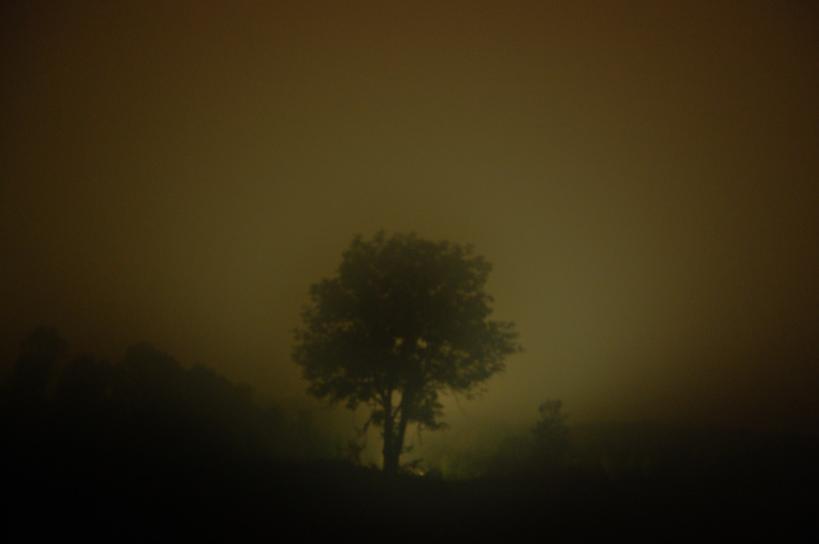 Tree in the fields by Nabium