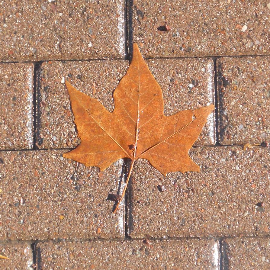 Flower Auburn Leaf wallpaper