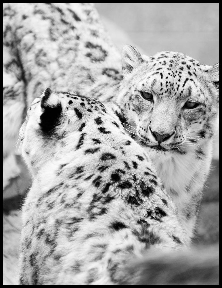 meow by mattsandy