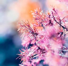 twinkel twinkel by myuneko626