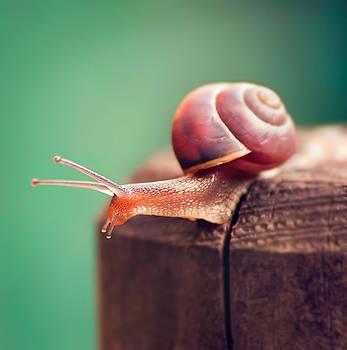 A Snail Named Gary by myuneko626
