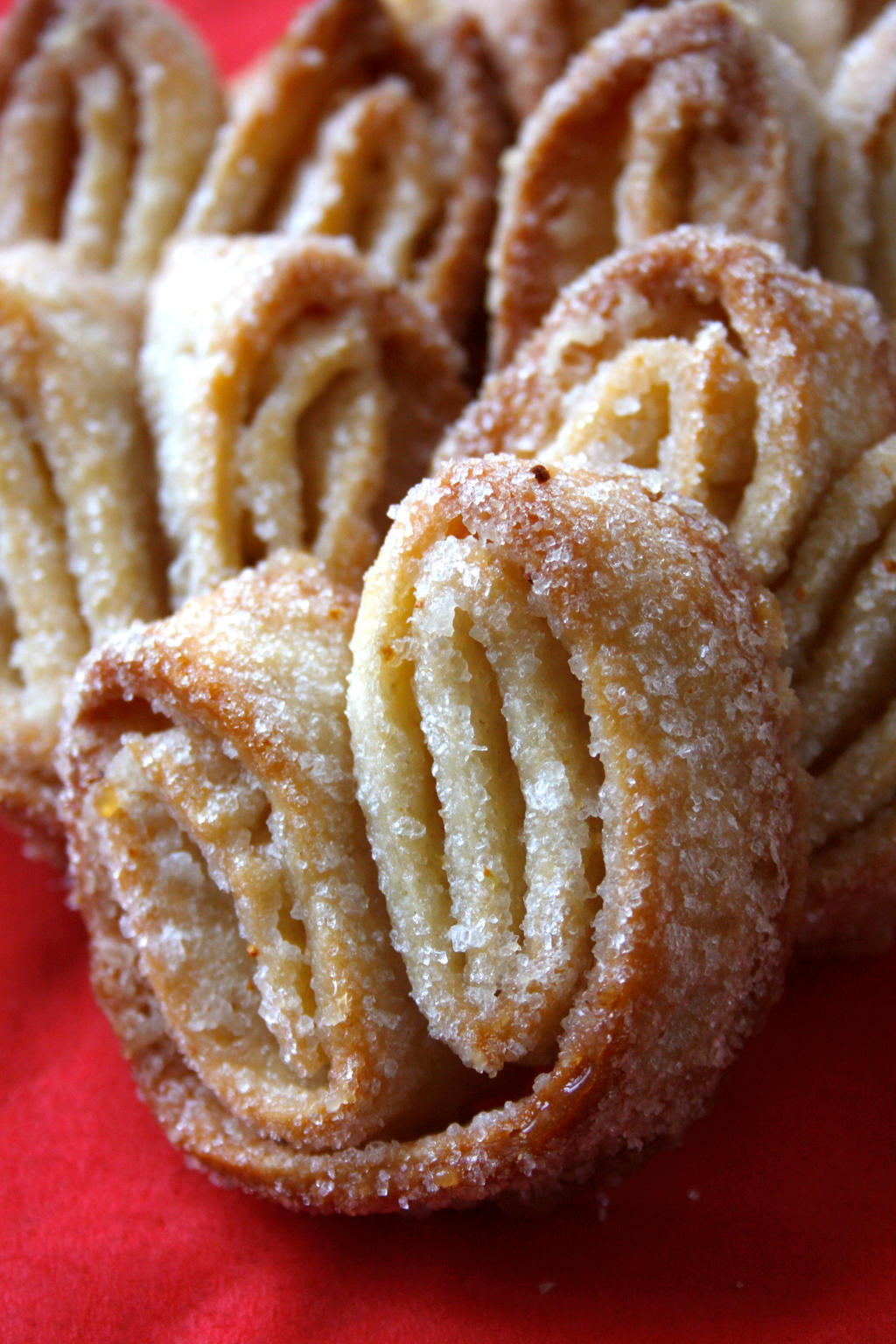 Palmiers by behindthesofa