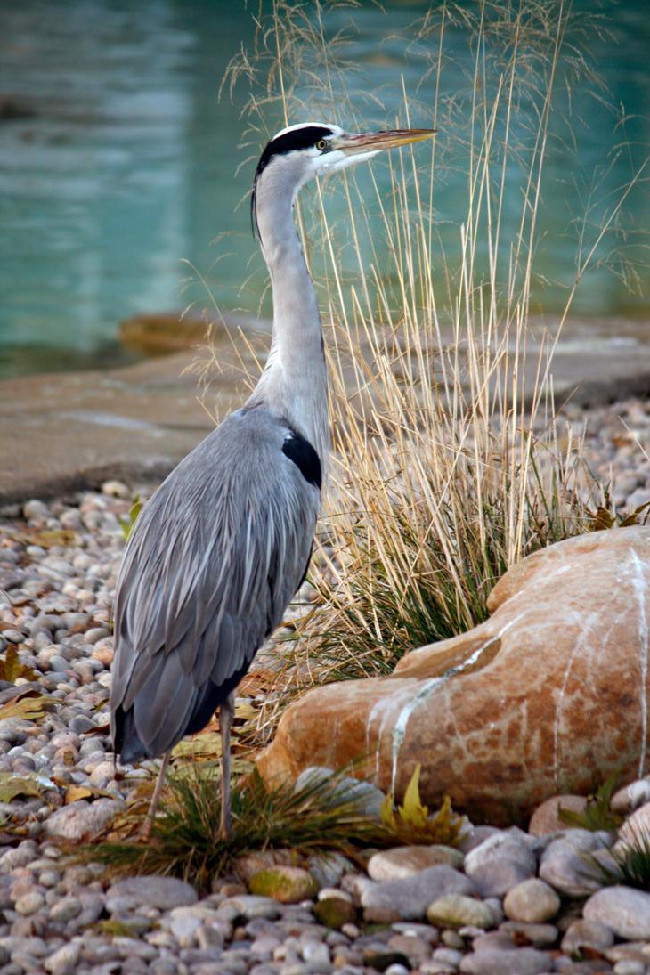 Heron by behindthesofa