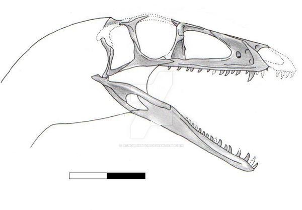Zupaysaurus skull by Afrovenator