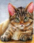 Kitten by IllegalHamsterThe