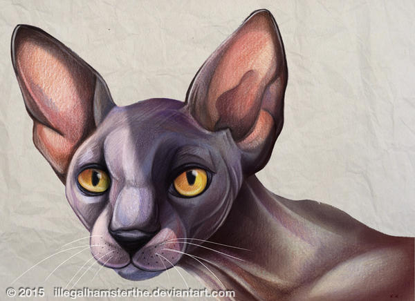 Sphynx by IllegalHamsterThe