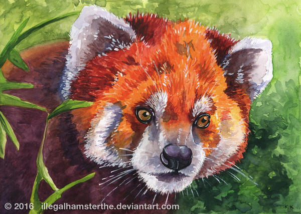 Red panda by IllegalHamsterThe