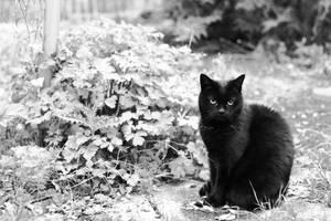 Cat Contrast by gnu2000