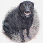 Another black doggo