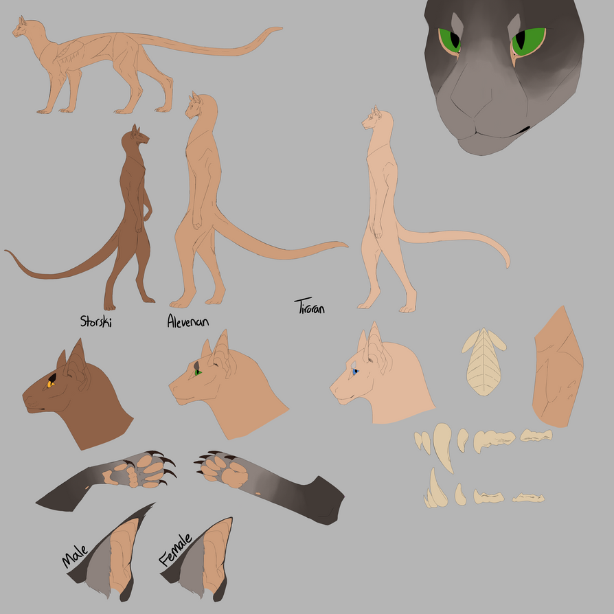 Felinid Species Reference by smol-kitty
