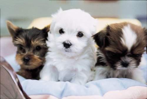 Puppies by 6Demonic6Snow6