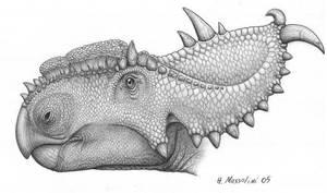 Pachyrhinosaurus by BrokenMachine86
