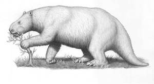 Mylodon darwinii