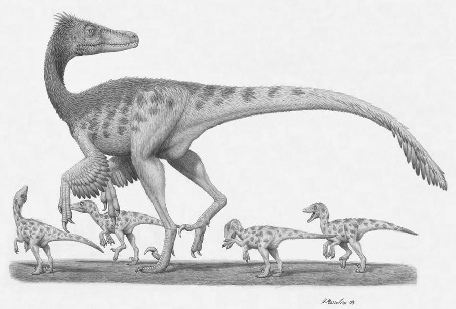 Velociraptor mongoliensis by BrokenMachine86