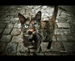 A cat called hipnoz by dcamacho