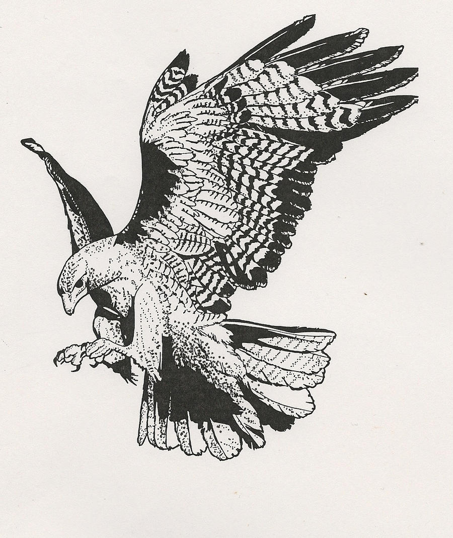 Eagle Tattoo Line Drawing : Red tailed hawk by ramageart on deviantart
