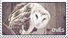 owls by Folkwe