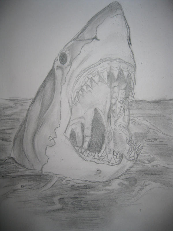 Great White Shark Drawings In Pencil