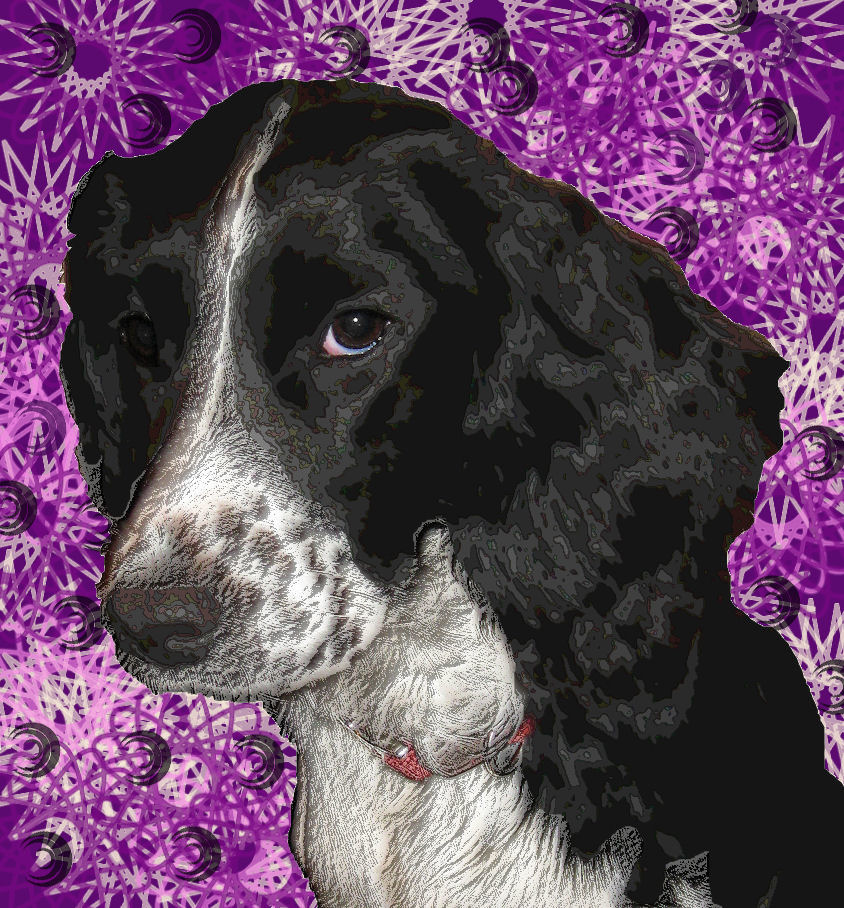 forensicfox's Profile Picture