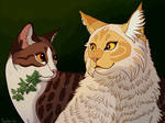 Medicine cats