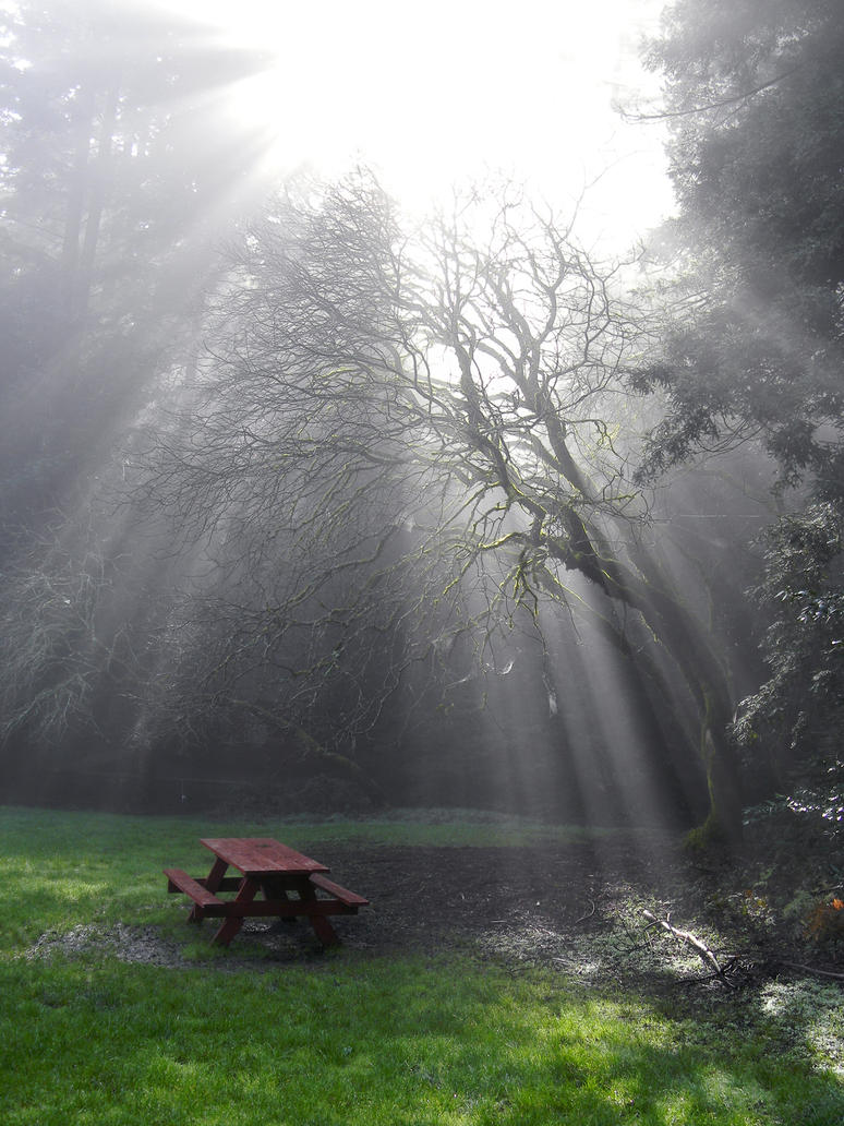 sun ray redwoods 4 by wafreeSTOCK