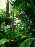 Jungle Forest by wafreeSTOCK