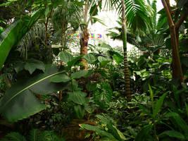 Jungle by wafreeSTOCK