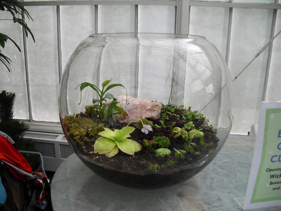 Bowl o' Plants by wafreeSTOCK
