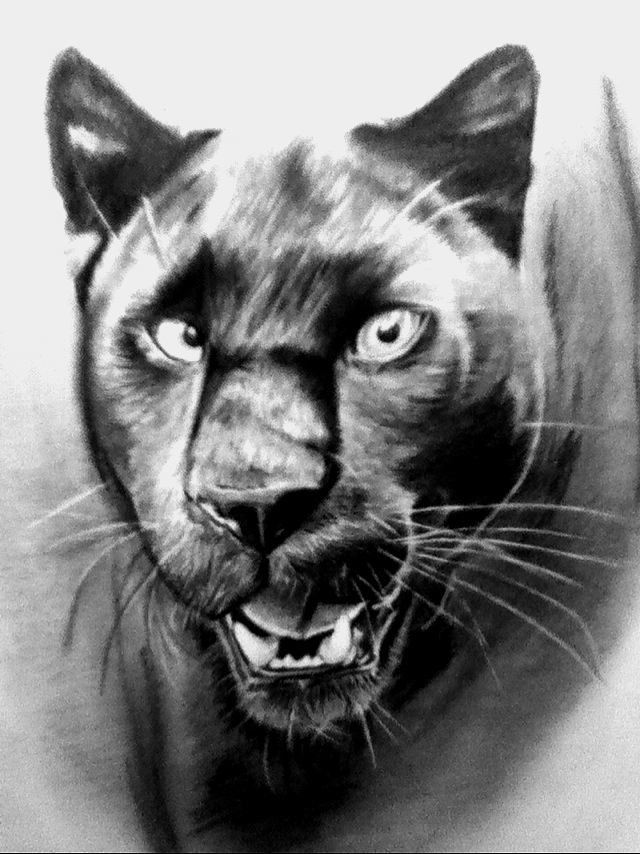 Black jaguar animal drawing - photo#27