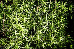 Lichen by Frog-studios