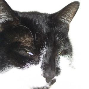 codo2000's Profile Picture