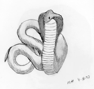 Cobra by DocMallard
