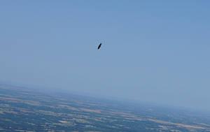 Eagle-Dance by DocMallard