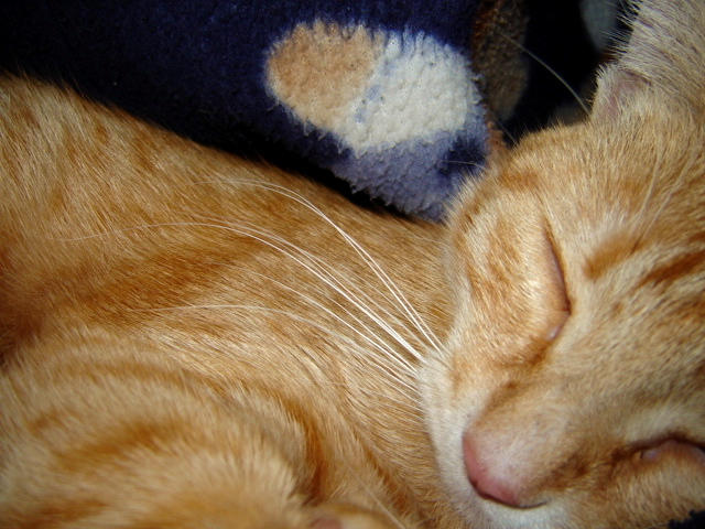 sleeping sequence 2