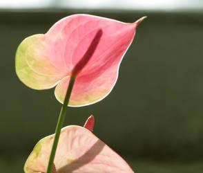 Pink green fb by ValliantEffort