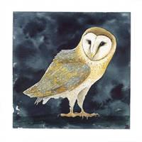 Barn Owl - Tyto Alba by saraquarelle