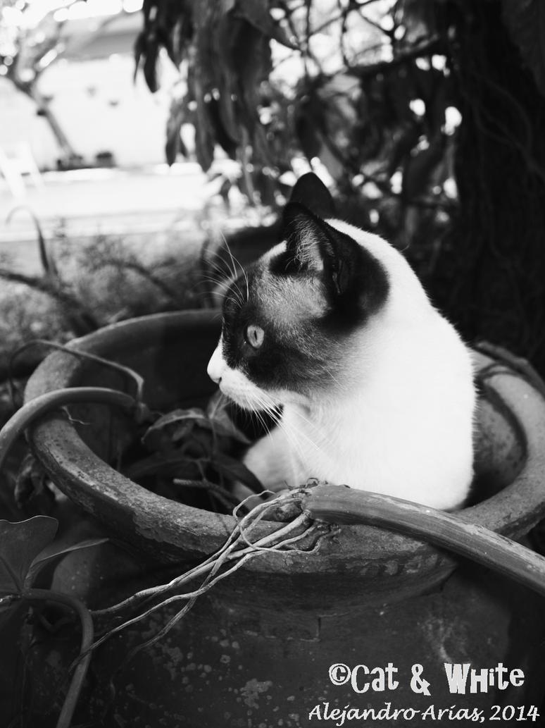 Cat in a pot 02 by Cat-n-White