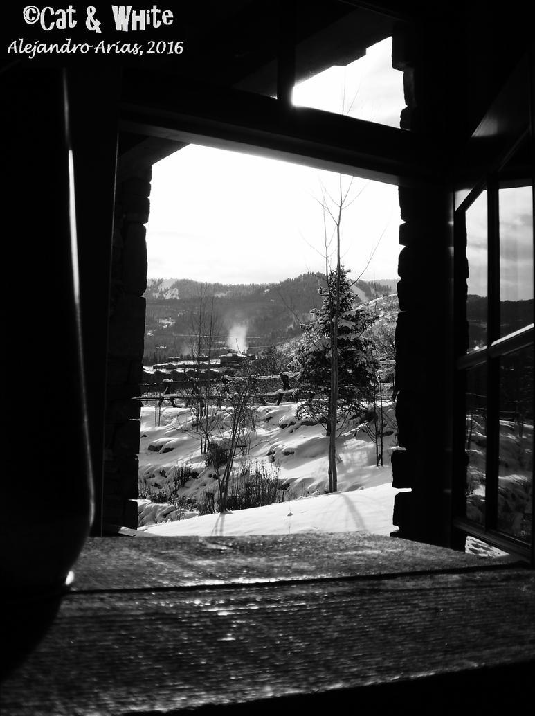 Winter Wonderland by Cat-n-White
